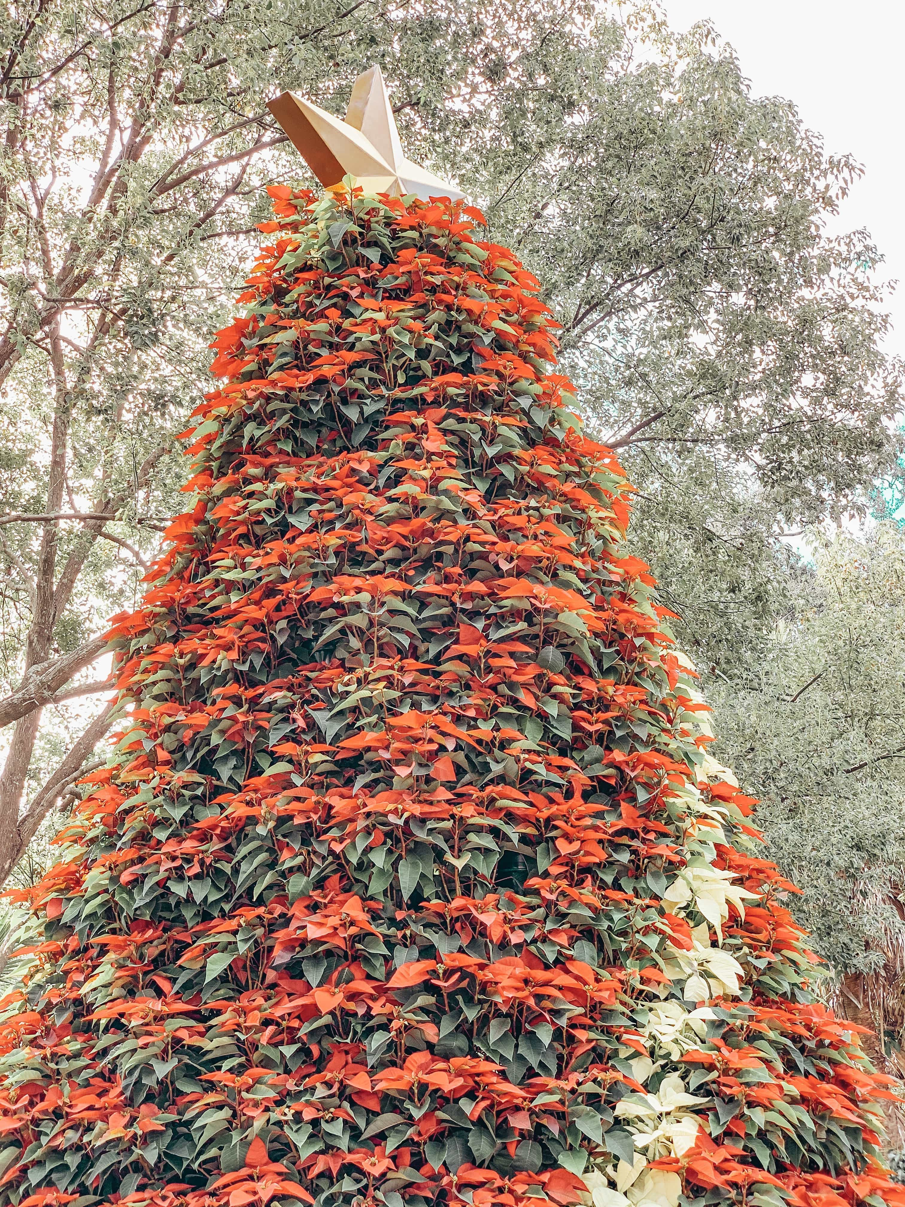 Christmas Town at Busch Gardens Tampa Bay