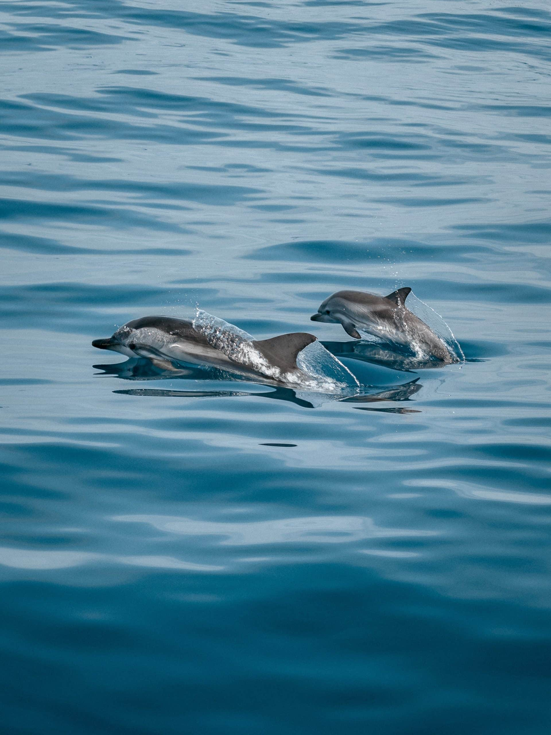 10 Interesting Facts About Dolphins