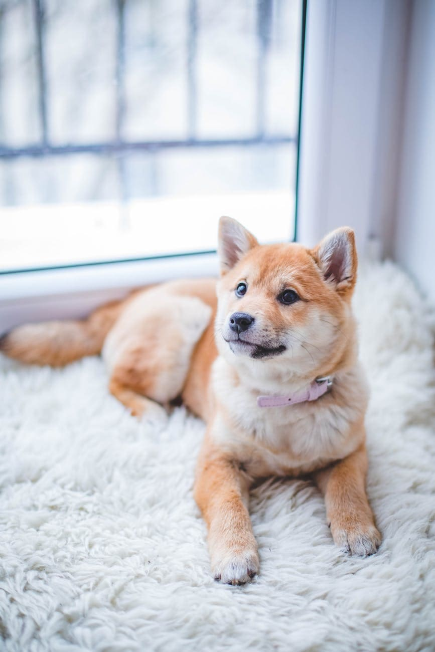 6 Important Things To Take Into Consideration When Buying A Dog