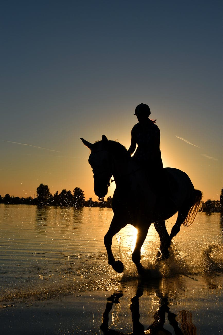 Essential Equipment You Need for Horse Riding