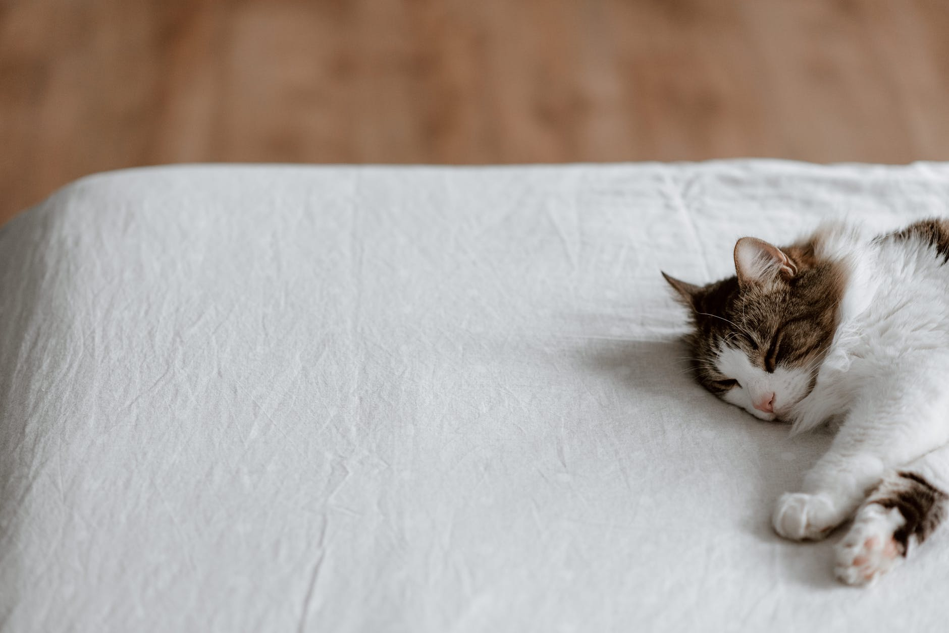 lazy cat sleeping on soft bed at home