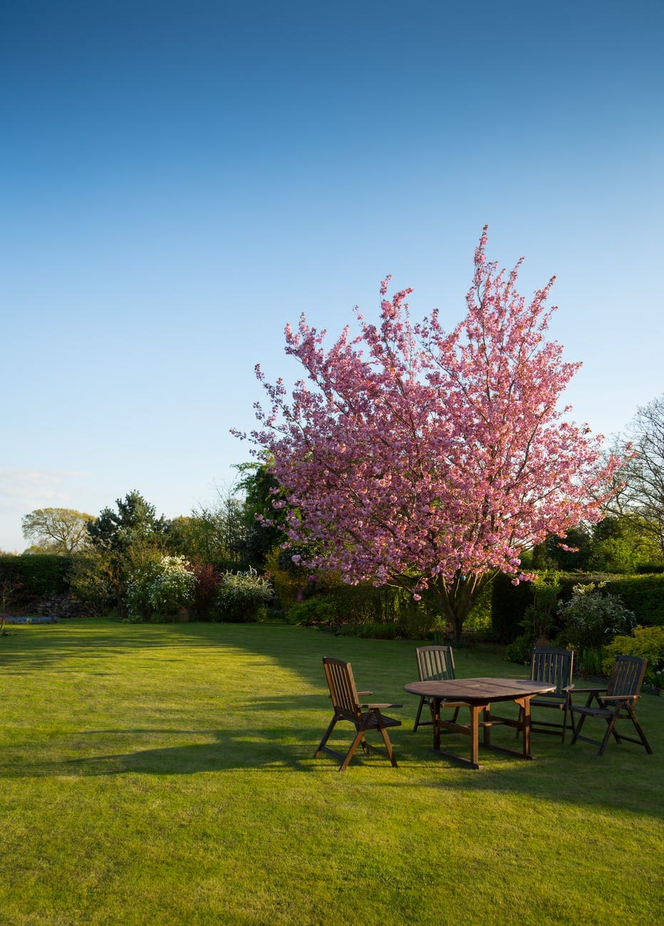 A Guide To Placing Trees In Your Garden