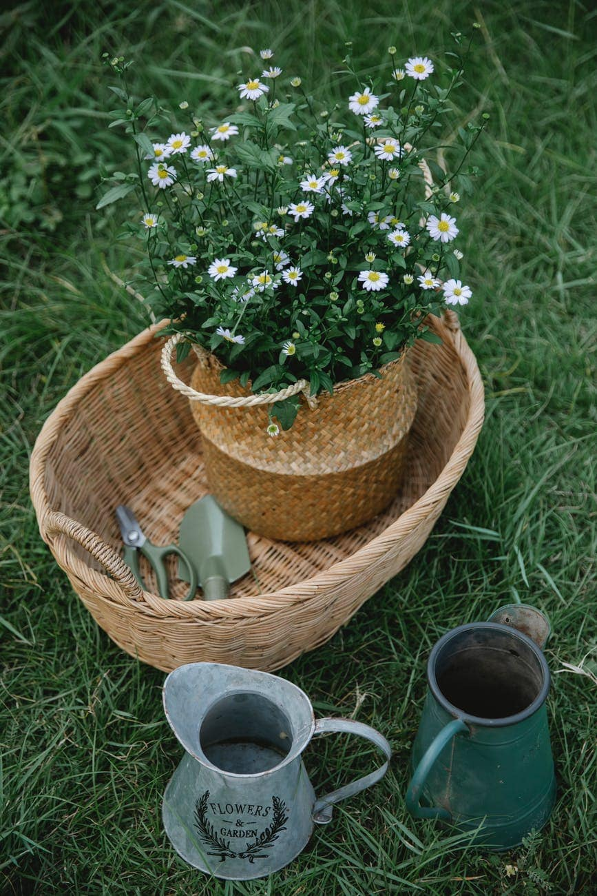 Get ready for a garden party with these helpful tips