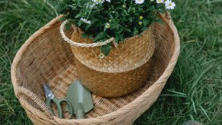 baskets with chamomiles and garden equipment near pots in nature