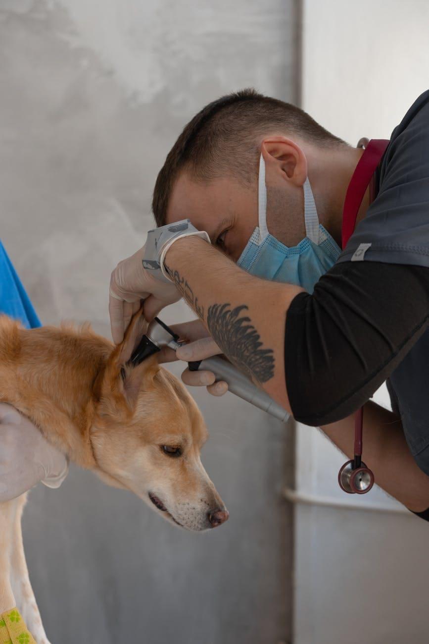 Veterinary Laboratory Services