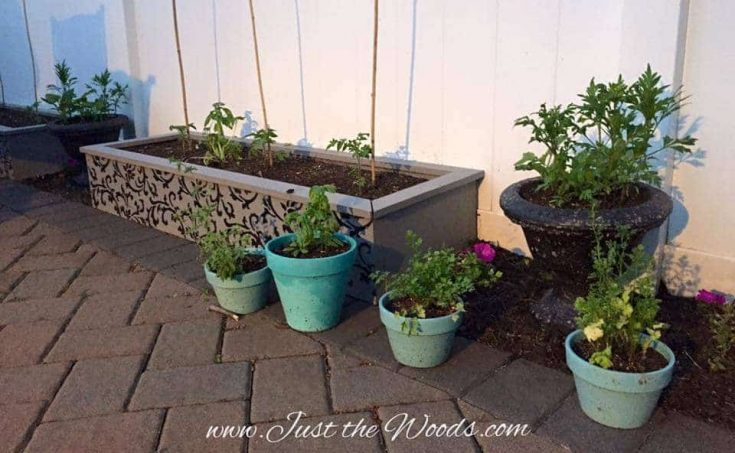 How to Spruce Up the Garden with Raised Garden Beds